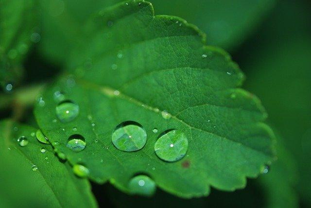 葉水の役割とは?観葉植物への与え方やタイミング(頻度)をご紹介!