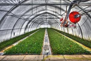 ビニール温室の効果&使い方とは?温室で効率的に菜園してみよう!
