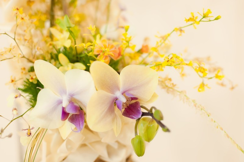 シンビジウムとは?種類や多年草としての特徴をご紹介!開花時期は?