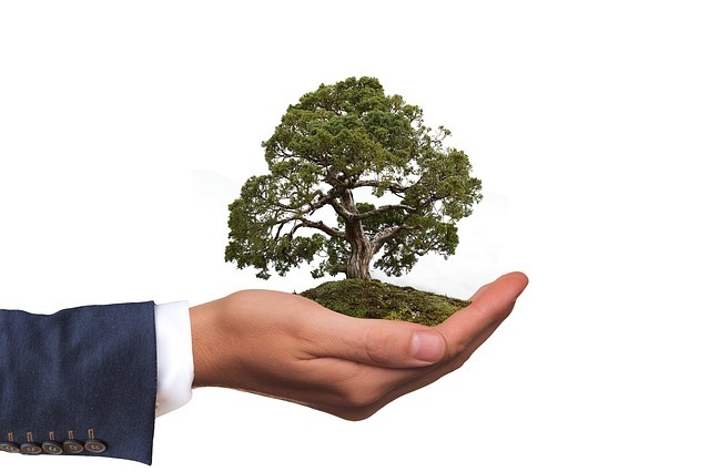 「取り木」とは?代表例を用いて時期・期間など具体的なやり方を解説!