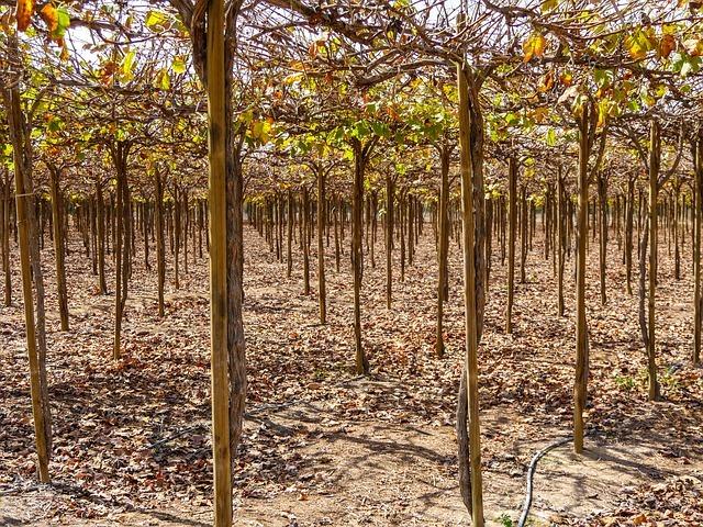「灌木(潅木)」とは?意味や定義をご紹介!灌木地・灌木林って何?