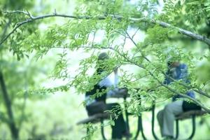灌木(潅木・低木)とは?自宅の庭木におすすめの灌木16種をご紹介!