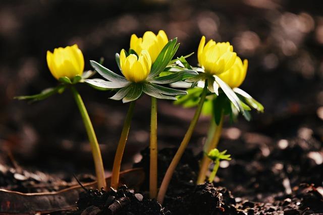 冬の草花ランキング人気TOP30!冬に植える・咲く・オススメの花は?