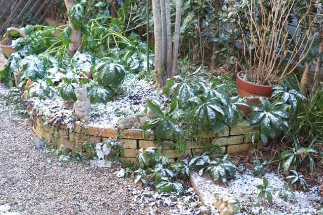 冬のガーデニングはこれだ!冬にこそ植えるべき品種&冬の花壇の作り方!