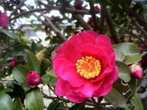 11月に咲く・咲いている代表的な花10選!各種、特徴や花言葉を紹介!