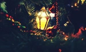 クリスマスに花をプレゼントしたい!上手な選び方とおすすめの花5選!