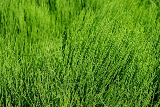 スギナに効果的に除草剤6選!おすすめの希釈倍率・散布方法も解説!