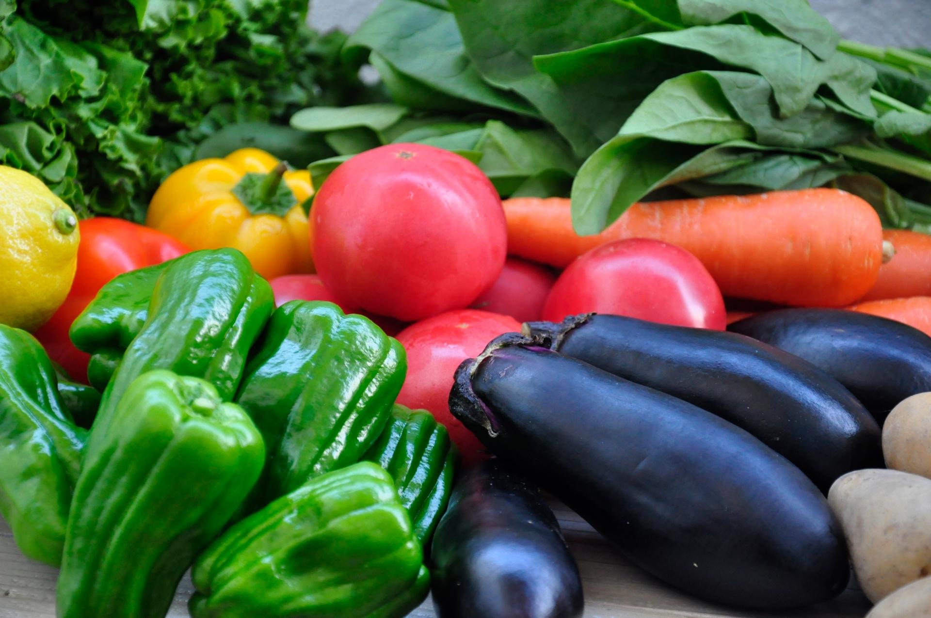 3月に植えるべき野菜10選!家庭菜園で3月から育てやすい野菜苗は何?