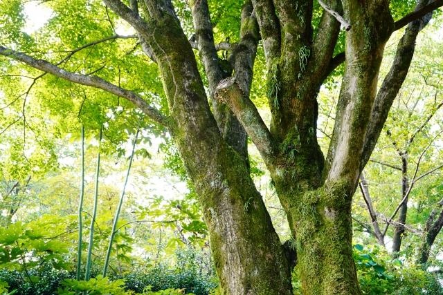 カイガラムシの駆除方法まとめ!樹木・植物別に原因と対策を解説!