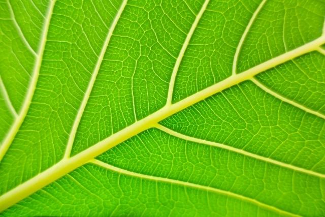 カイガラムシ対策に有効な薬剤8選!幼虫と成虫での使い分けや処理方法を解説!