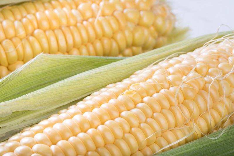 とうもろこしの収穫ガイド!収穫時期の見分け方や方法・回数を解説!
