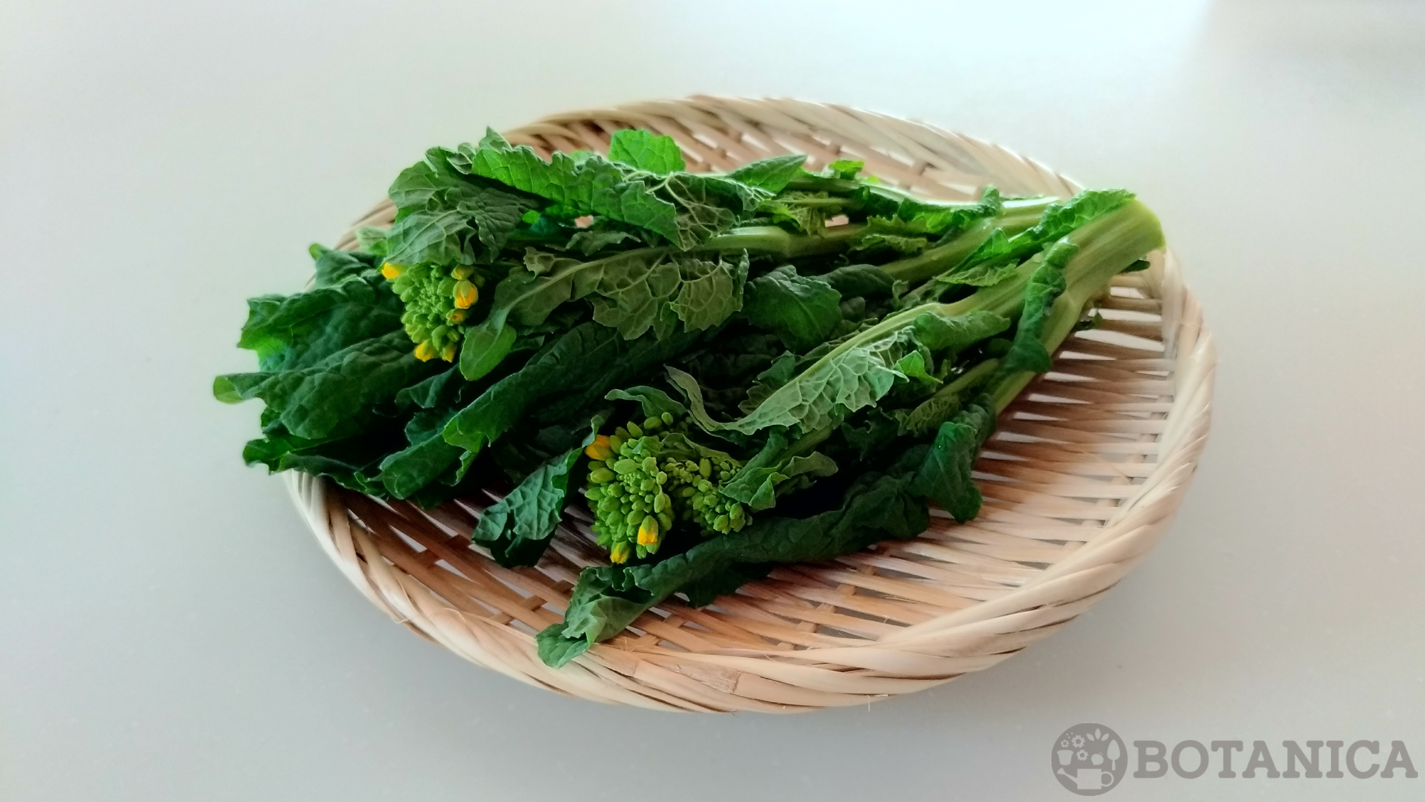 菜の花の旬な季節はいつ?開花時期から美味しい食べ方までご紹介!