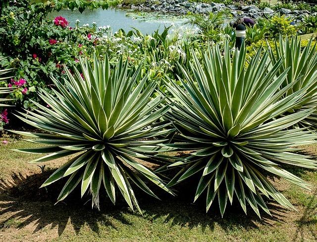 ドライガーデンに合う植物10選!お洒落な庭にするためのコツもご紹介!