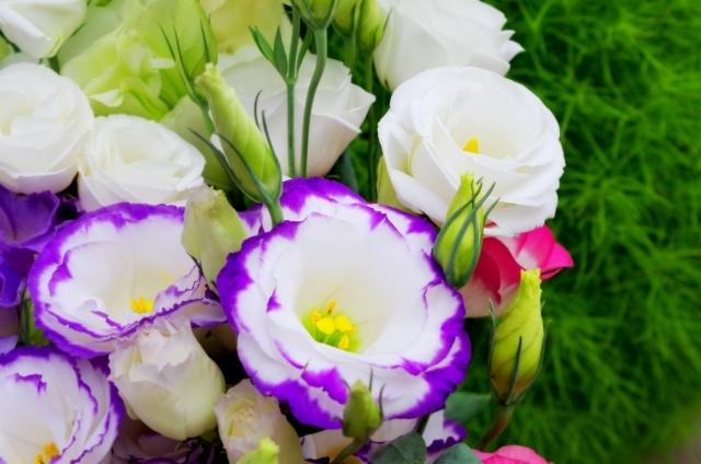 トルコキキョウの花言葉!白・紫・青・緑・ピンクなど色別に意味を解説!