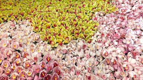 蘭(ラン)の花言葉をご紹介!白・ピンクなど種類や色別の意味合いは?