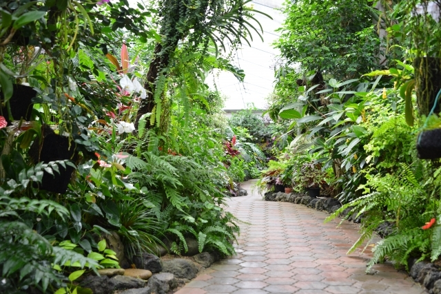 東京近郊にある植物園まとめ15選!各施設の見どころや設備もご紹介!