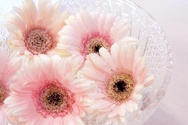ガーベラの花言葉とは?種類や色別にご紹介!新たな門出に相応しい?