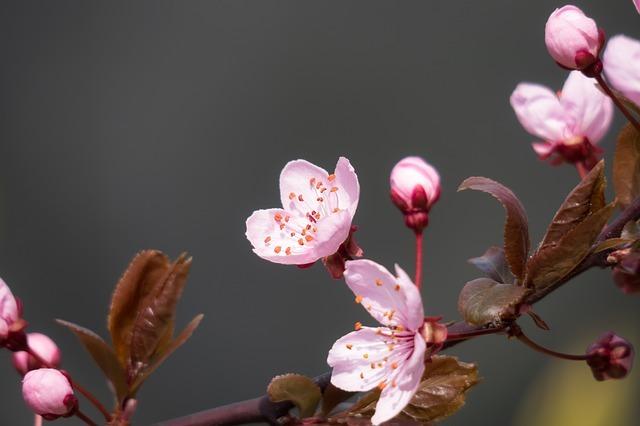 1月の花といえば?1月に咲く・咲いている花の特徴や花言葉をご紹介!