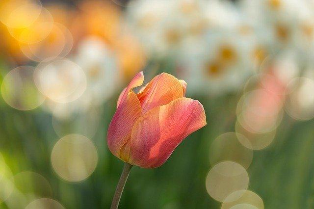 春の花まとめ11選!春に咲く・咲いている花の特徴や花言葉をご紹介!
