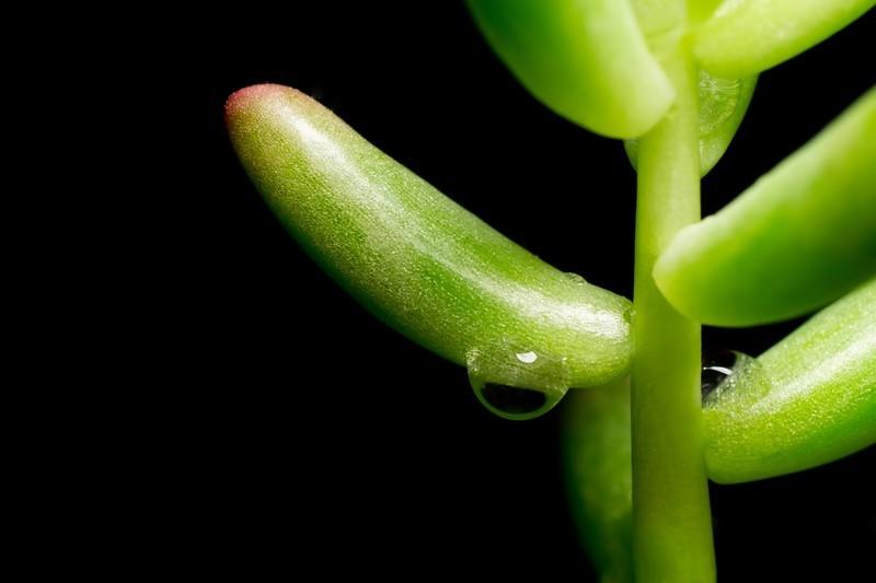 多肉植物の種類まとめ20選!分類別に人気・おすすめ品種を厳選紹介!