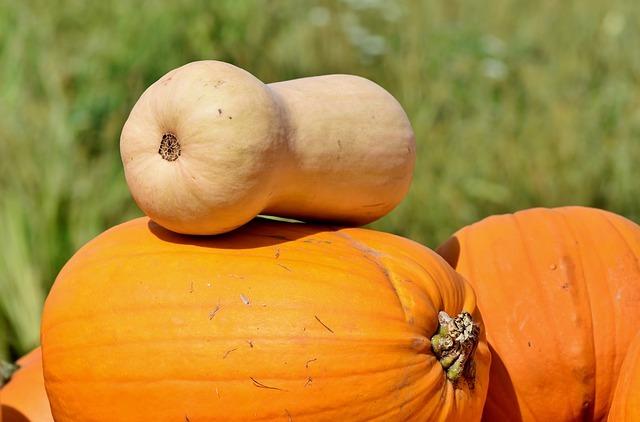 バターナッツ(かぼちゃ)の育て方!収穫時期の目安や方法など解説!