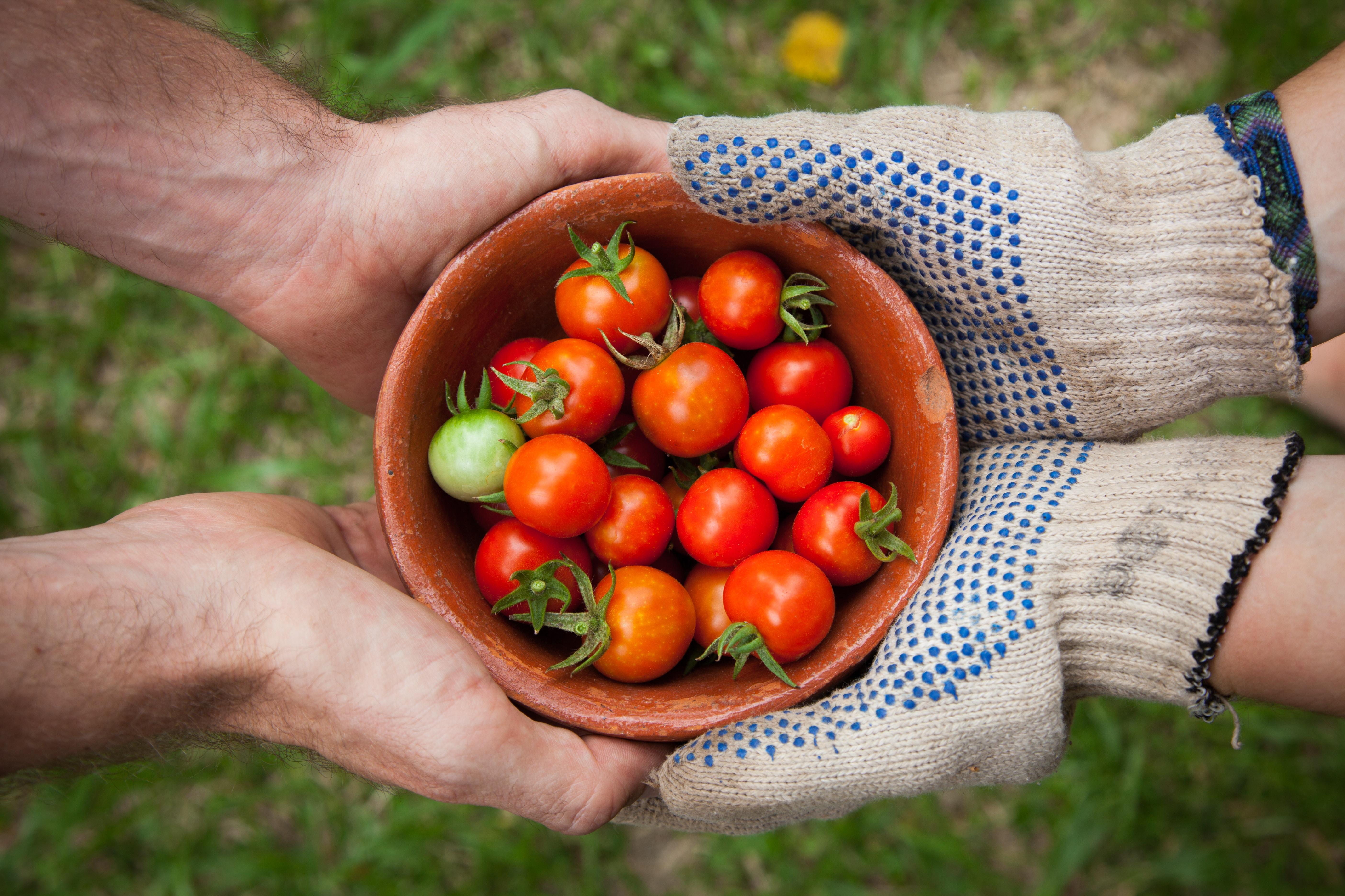 プランター栽培のコツ・注意点まとめ!畑などの露地栽培とはどう違う?