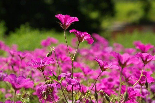グランドカバープランツ12選!可愛い花が咲くおすすめ種類を厳選!