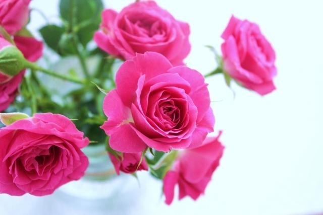 「スプレーバラ」ってどんなバラ?その特徴や品種・種類をご紹介!