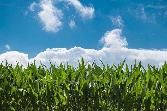 ハダニの駆除方法4選!無農薬での対策も含めおすすめの対処法を紹介!