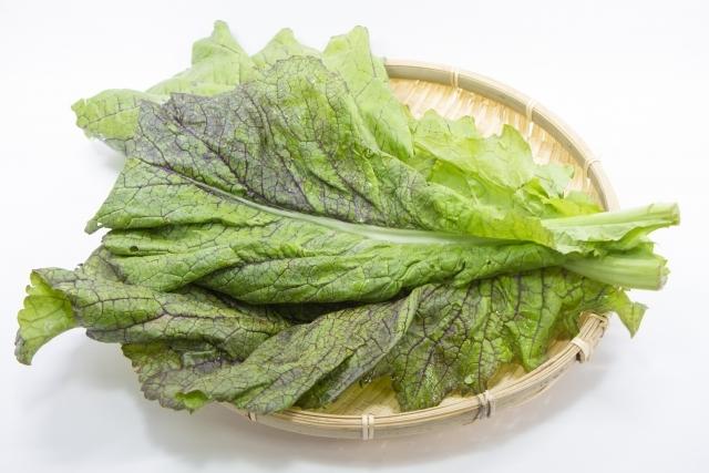 高菜の育て方!種からの育苗のコツや収穫方法・食べ方までご紹介!