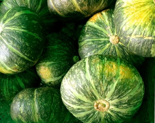 かぼちゃの収穫時期の見分け方と上手な収穫方法!収穫後の貯蔵方法までご紹介!