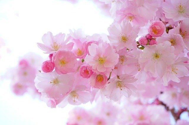 女の子の名前にも使える花・植物15選!季節別に特徴・花言葉を紹介!