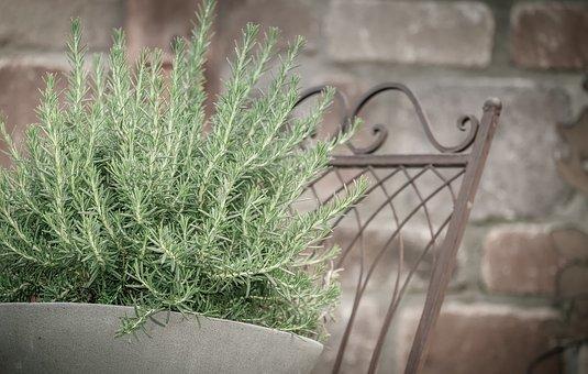 ローズマリーの育て方!植え替えの仕方や花が咲かない時の対処法など!