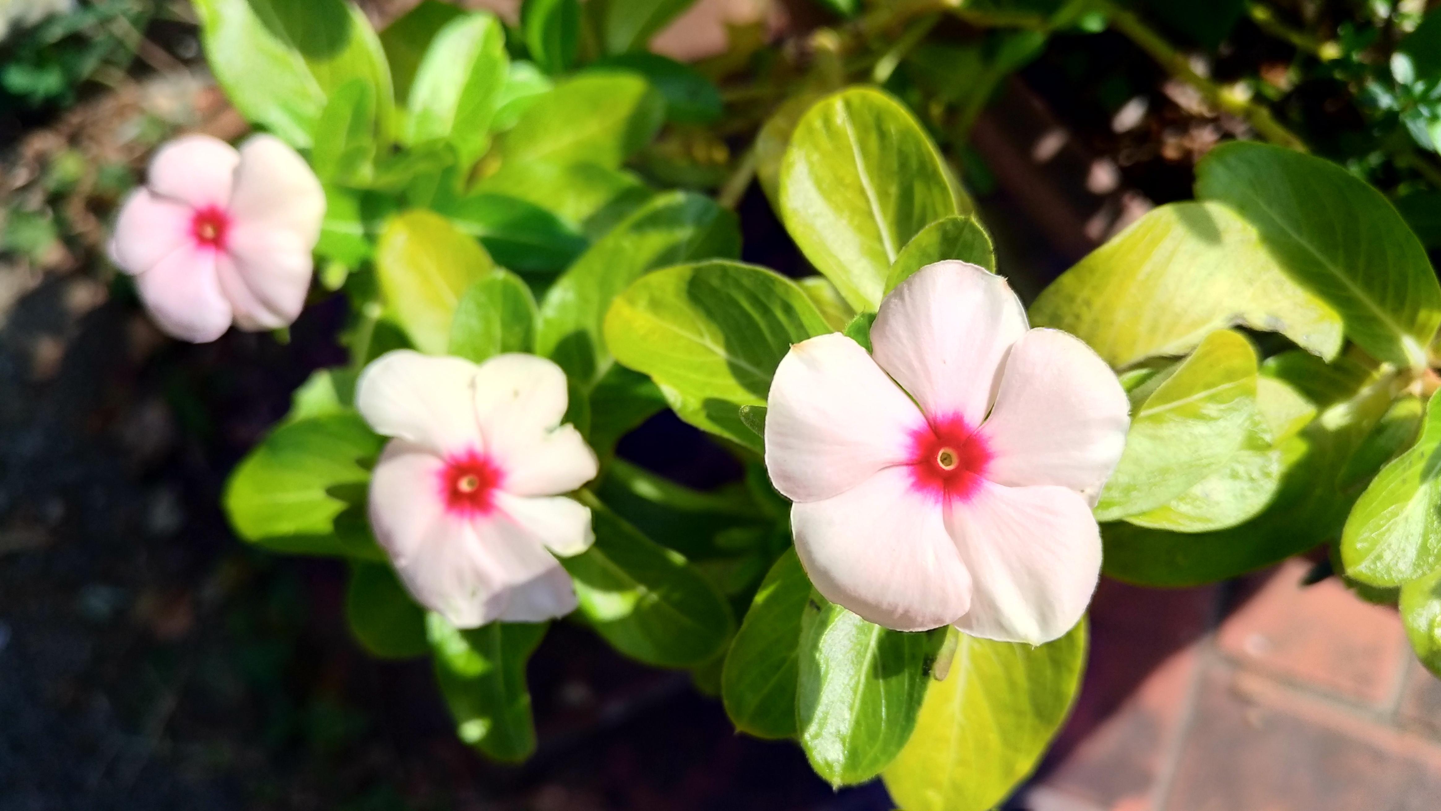 「友情」の花言葉をもつ花11選!友人への贈り物におすすめ植物は?