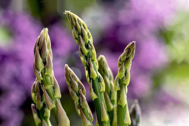 アスパラガスの育て方・栽培方法!種まきの仕方から収穫方法まで解説!