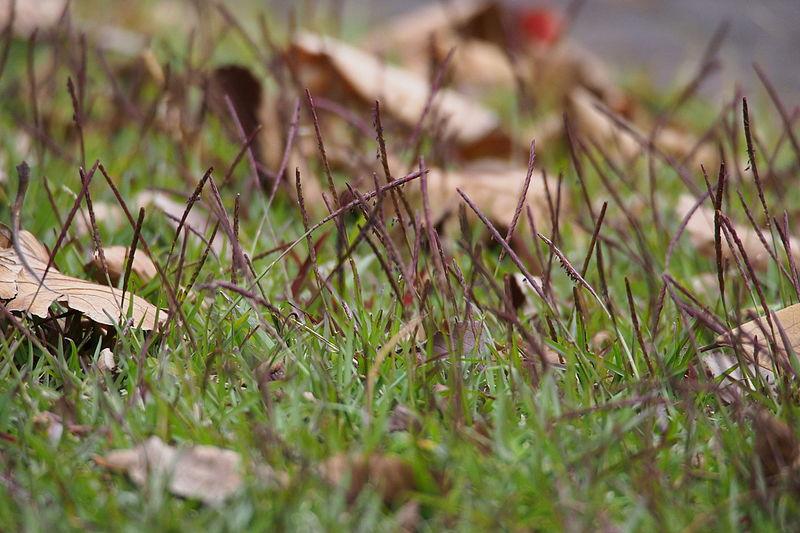 芝生の除草剤「シバゲン」について徹底解説!正しい使い方や効果は?