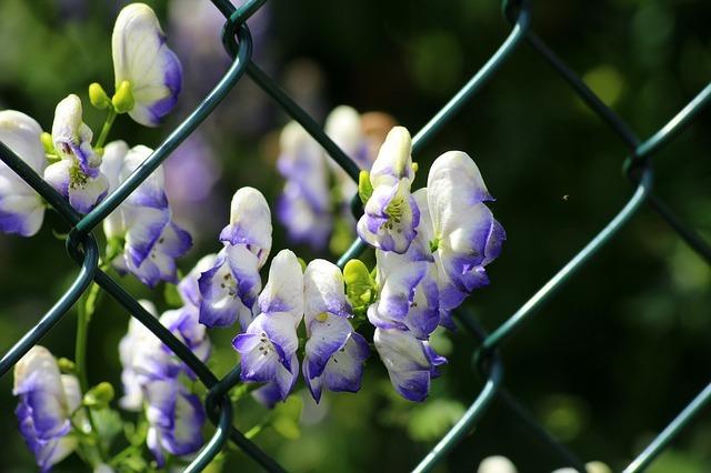 トリカブトってどんな植物?生息地や特徴・毒性・花言葉などを紹介!