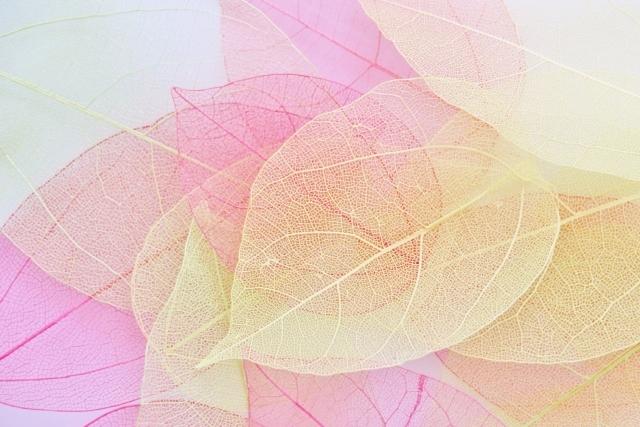 葉脈標本(スケルトンリーフ)とは?おすすめの葉っぱや作り方を解説!