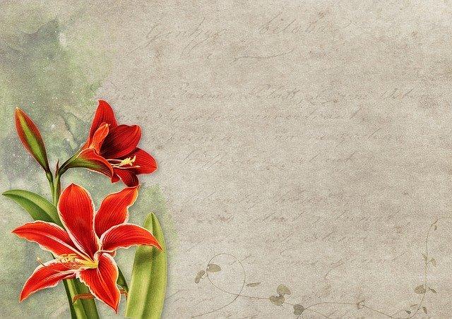 アマリリスの花言葉とは?赤・白・ピンクなど色別の花言葉がある?