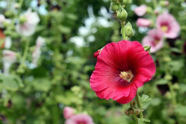 赤い花図鑑(40選)春夏秋冬それぞれの季節別に赤く咲く花をご紹介!