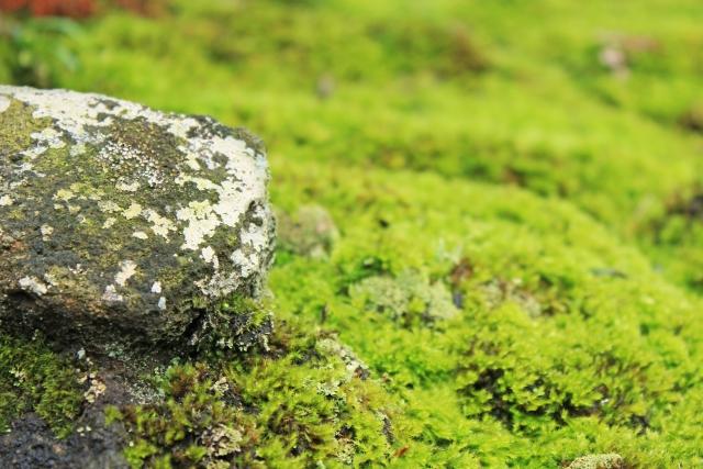 庭に生える苔の除去方法5選!重曹・熱湯・除草剤など効果的なのは?