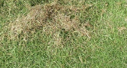 芝生の「サッチ」とは?サッチの上手な取り方や分解のやり方を解説!