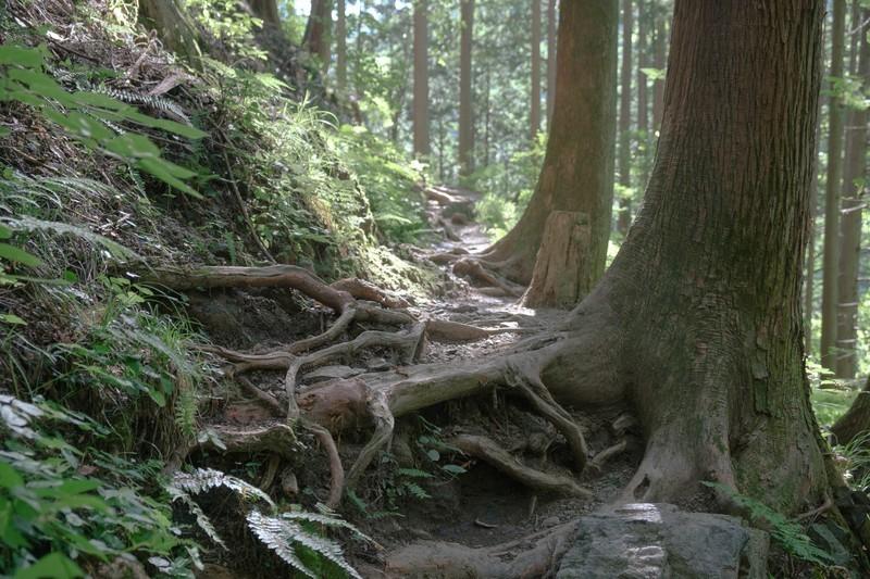 「抜根」とは?庭木をDIYで処分する場合に必要な道具・手順も紹介!