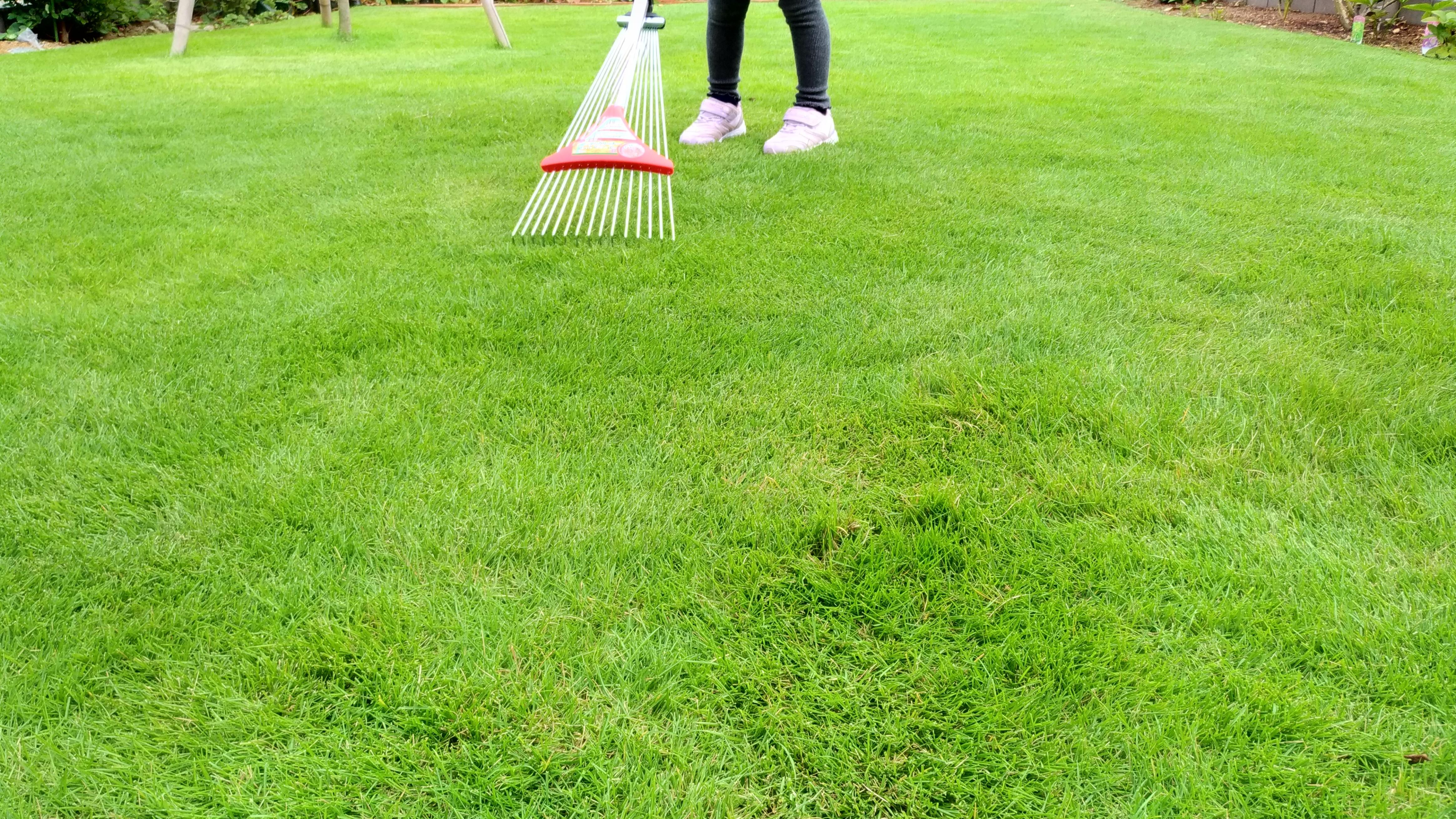 芝生の手入れガイド!季節ごとに「やるべき作業」を詳しく解説!