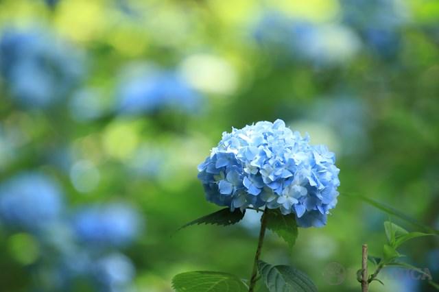 6月の花といえば?6月に咲く・咲いている花10選の特徴や花言葉!