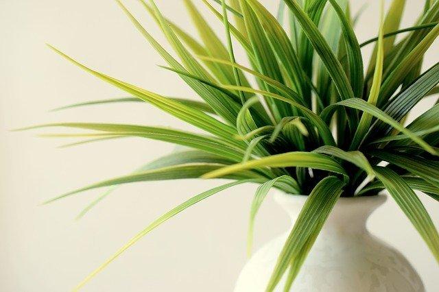 観葉植物の植え替え入門!大事なポイント4つ&便利アイテムを紹介!