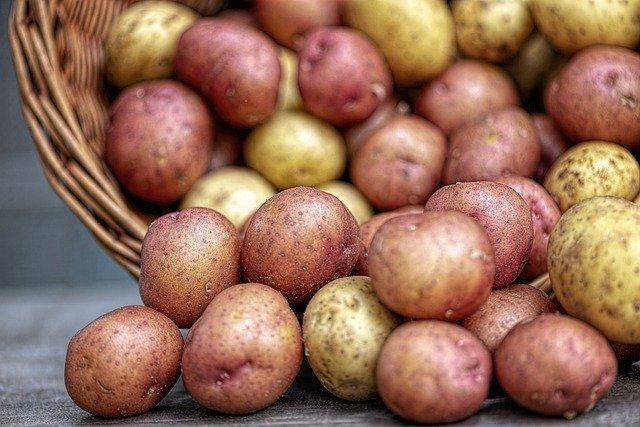 じゃがいも栽培におすすめの肥料は?施肥の適期や上手な使い方も解説!
