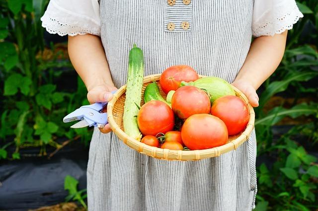 ダイソーで買える「野菜の種」を紹介!100均でコスパよく栽培しよう!