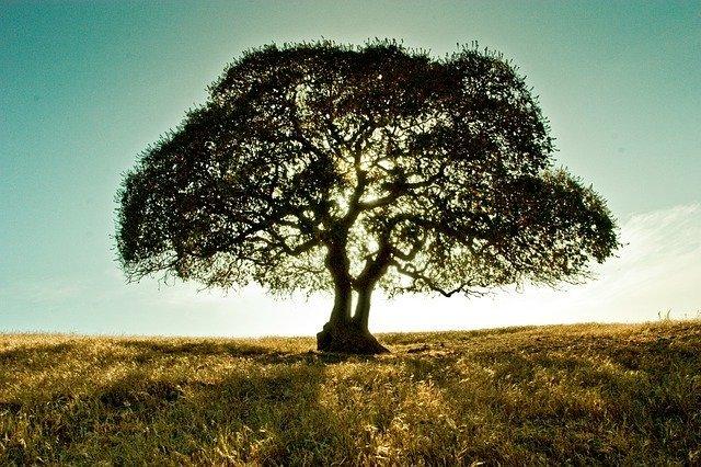モチモチの木(絵本)のモデルとなった木は?登場するのは栃の木?