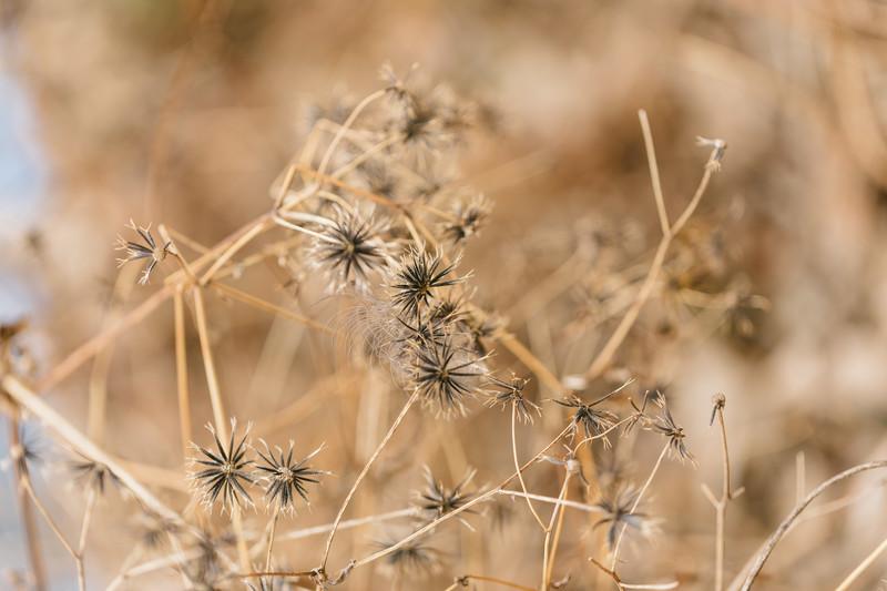 センダングサとは?特徴・見分け方や雑草としての駆除方法を紹介!